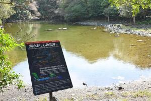 笠山椿群生林の解説板の写真02