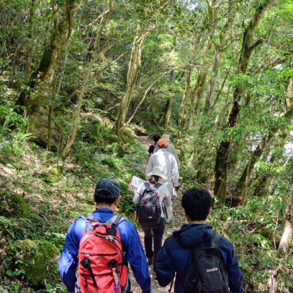 長門峡遊歩道散策の写真01