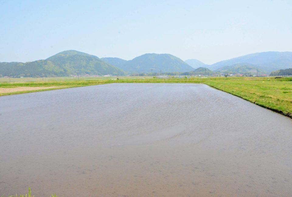野坂山の写真